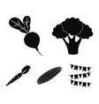 broccoli cabbage radish green cucumber carrots vector image vector image