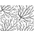 hand drawn of ogonori seaweed on white background vector image vector image