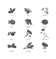 Herb symbols set vector image