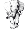 Elephant front view vector image