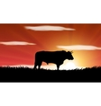 bull in the field in Spain vector image vector image