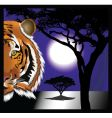 tiger night vector image vector image
