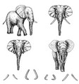 elephant sketch icon set vector image vector image