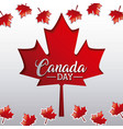 independence canada day vector image