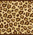 leopard skin fur print seamless pattern vector image