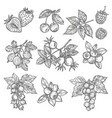 sketches of garden and wild berries vector image vector image