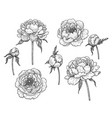 hand drawn monochrome peony flowers and buds vector image vector image
