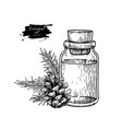 Pine essential oil bottle and fir hand drawn