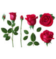 realistic rose dog-rose flower blossom petals and vector image
