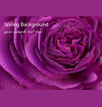 rose flower close up realistic background vector image