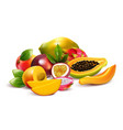 fruity tropical bunch composition vector image vector image