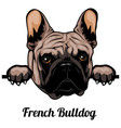 french bulldog - color peeking dogs - breed face vector image vector image