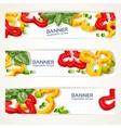 horizontal banners with sweet peppers and basil vector image vector image