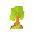 landscape scene with forest or park tree vector image vector image