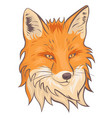 the head fox isolate on a white background vector image vector image