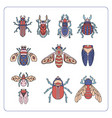 beetles maryls insects hand drawing doodling set vector image