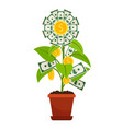 flower money investment isolated on white vector image vector image