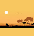 Silhouette kangaroo in the hill landscape