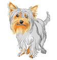 yorkshire terrier sketch vector image vector image