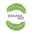 banana green leaf logo vector image vector image