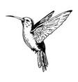 humming bird engraving vector image vector image