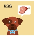 products for dogs vector image vector image