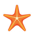 sea star caribbean starfish on a white background vector image