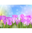 Tulips in garden on blue sky EPS 10 vector image