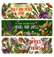 vegan herbs and organic seasoning spices vector image vector image