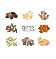 grains and seeds isolated on white background vector image