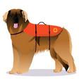 leonberger lifesaver dog vector image vector image