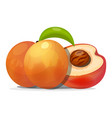 ripe peaches whole and slice vector image vector image