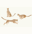 two jaguars on a white background picture vector image vector image