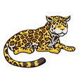 cartoon jaguar cat vector image vector image