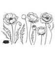 poppy flower drawing set isolated wild vector image vector image