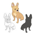 purebred dog in three different styles as hand vector image vector image