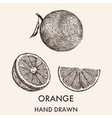 Sketch of whole orange half and segment Hand drawn vector image vector image