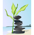 bamboo plant and black stones on beach vector image