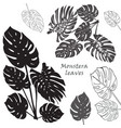 silhouette tropical monstera leaves black vector image