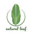 banana natural green leaf logo vector image vector image