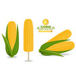 corn harvest detailed label vector image vector image