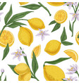seamless citric pattern with citrus fruits vector image