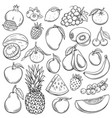 sketch fruits vector image vector image