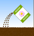 sowing seeds flowers into soil in the vector image vector image