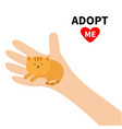 adopt me hand arm holding orange red cat animal vector image vector image