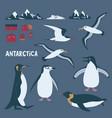 antarctica themed set with penguins albatross vector image