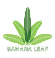 banana nature green leaf logo vector image vector image