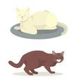 different cat cute kitty pet cartoon cute animal vector image vector image