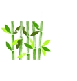 Hand painted bamboo stems and leaves vector image