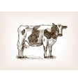 Cow hand drawn sketch vector image vector image